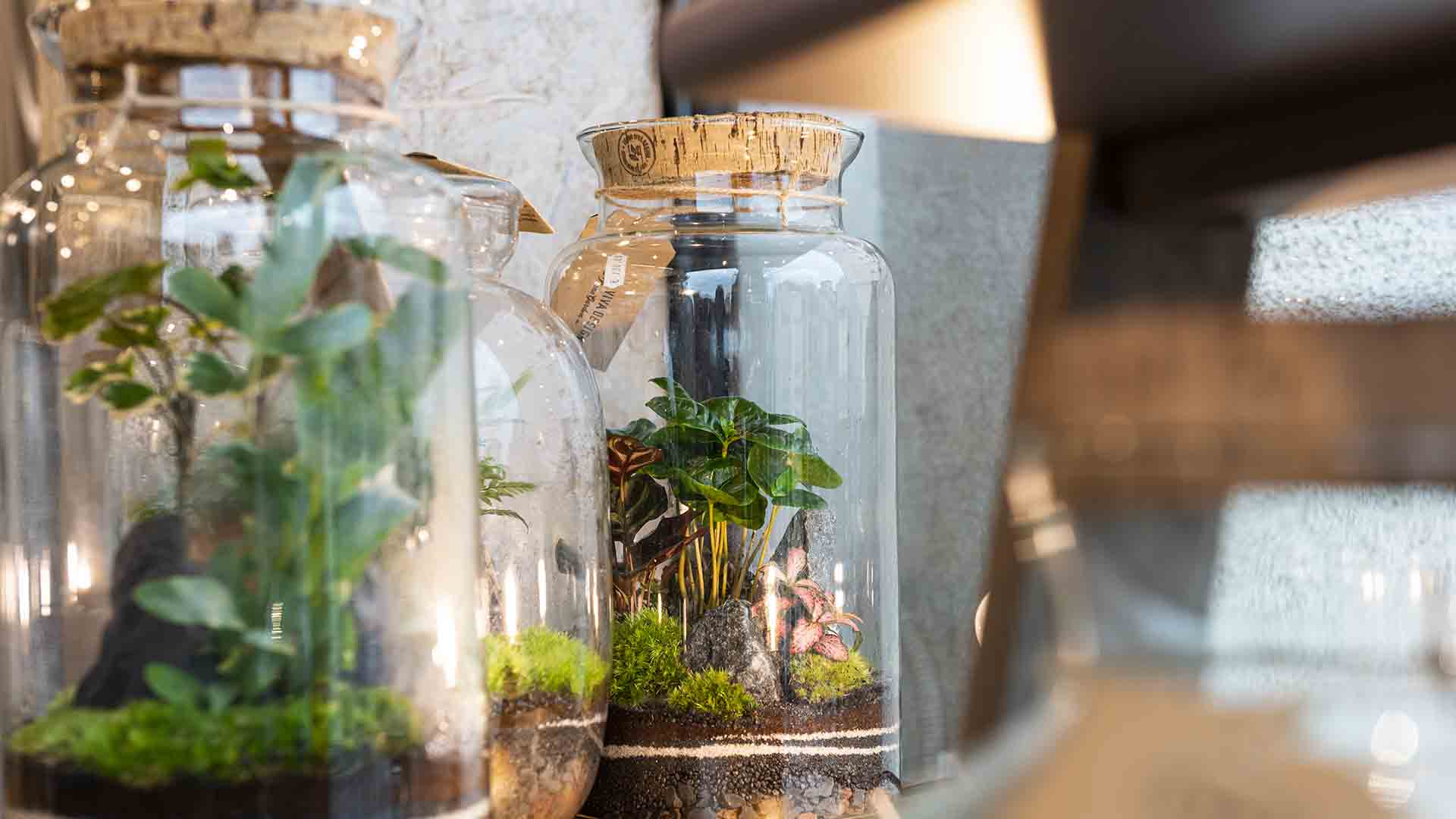 terrari-nano-garden